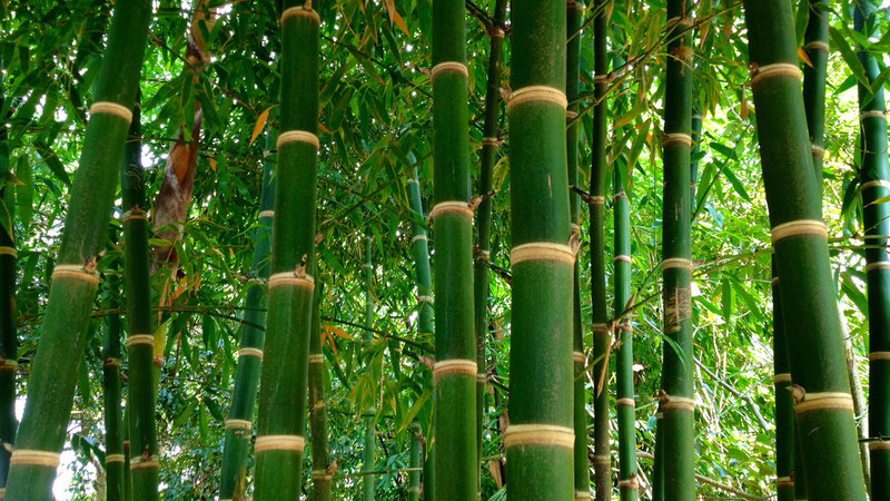 everis 'bamboo' analogy